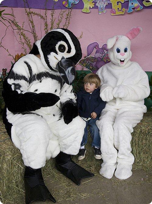 rabbit-disguises-19