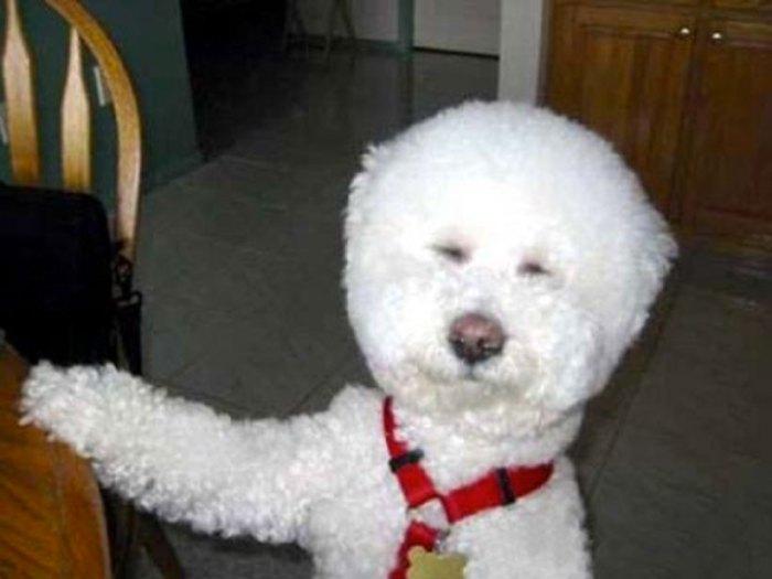 Dog As A Snowman