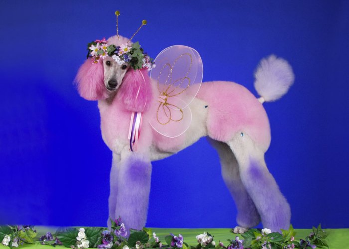 A Dog Dressed As A Fairy
