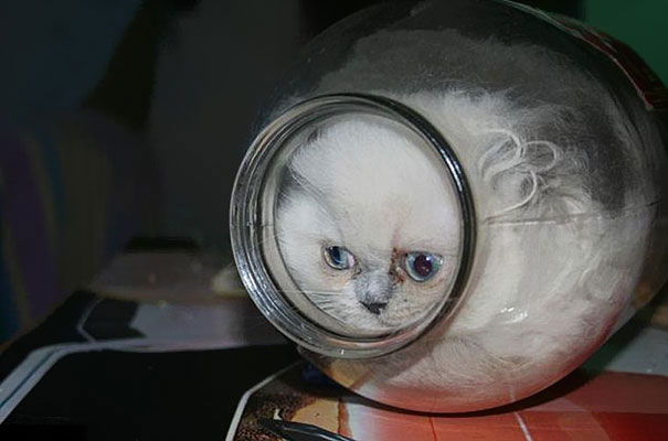 Cats Are liquid: Cats In A Bottle