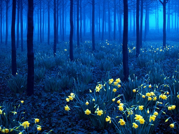 Black Forest (Schwarzwald), Germany