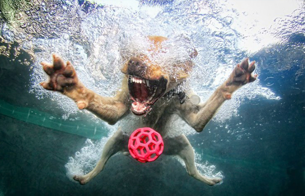 Amazing Big Mouth Dogs Underwater