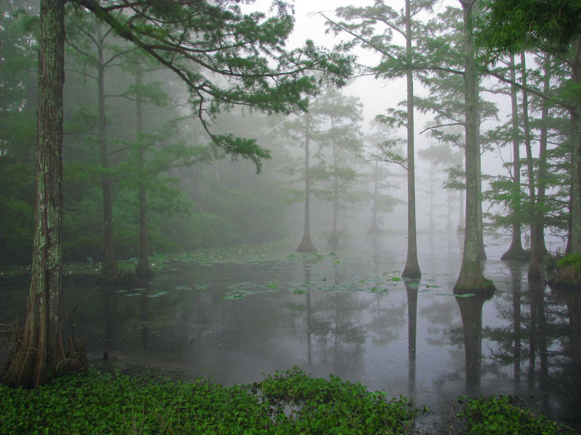 Sam D. Hamilton Noxubee National Wildlife Refuge, Missisippi