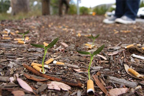 vos-megots-de-cigarettes-transformes-en-plantes-graces-a-des-semences3
