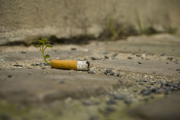 Cigarette Butts Are Transformed Into Plants 4