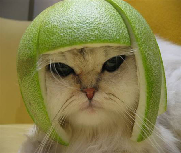 white kitten wearing lime on head