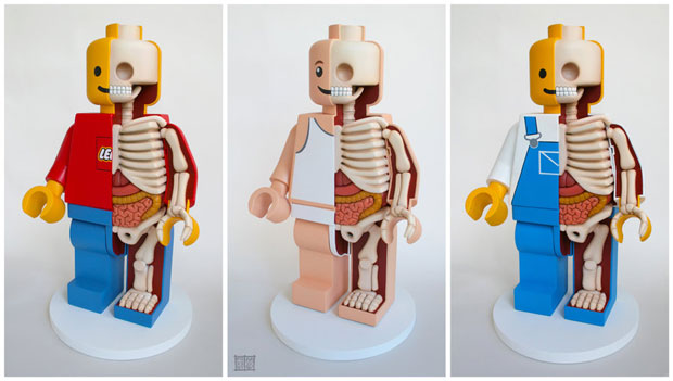 Dissected Anatomy Model Of A Lego