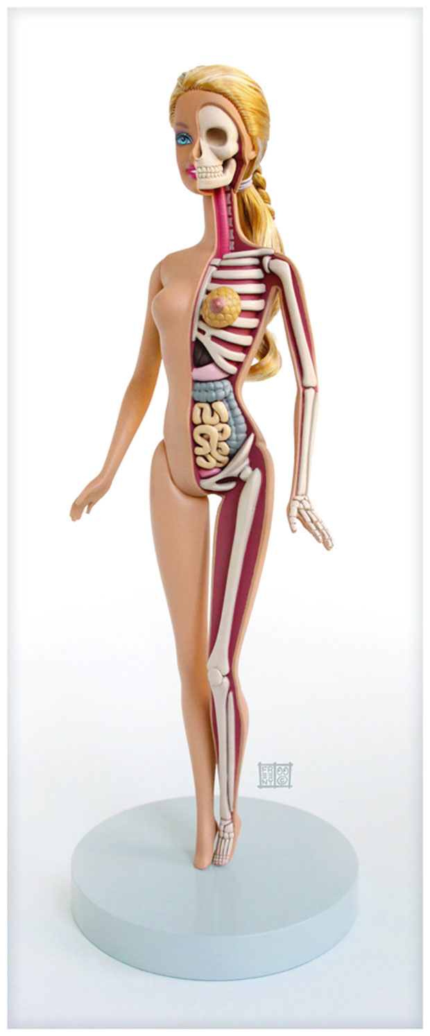 Dissected Anatomy Model Of The barbie Doll