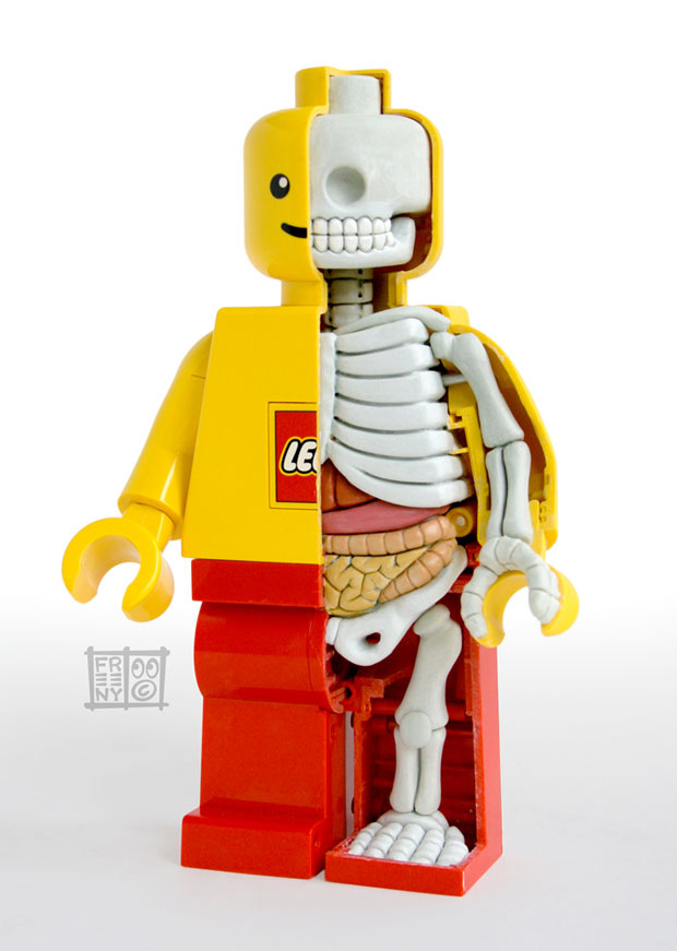 Dissected Anatomy Model Of Lego