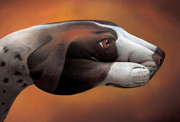 Dog-Pointer1-Ultra Realistic Hand Painting