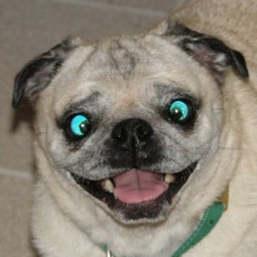 Pets Making Human-Like Funny Face Expressions (Photo gallery)