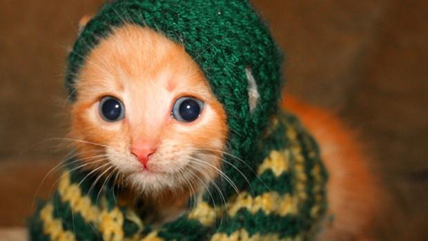 Hood Wearing Kitten