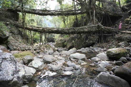 cherrapunji living bridges in India from tree roots