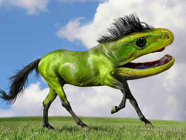 15 New Really Wacky Species Of Animals Created Using Photoshop ...
