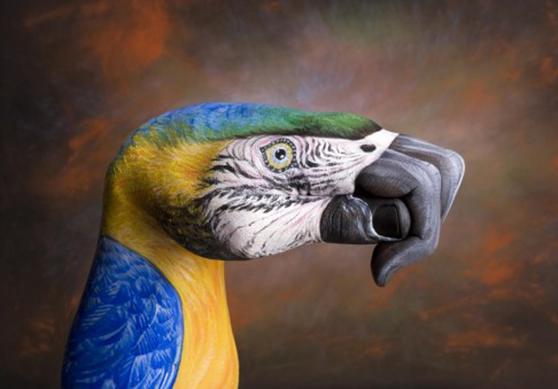 Parrot-on-brown1-Ultra Realistic Hand Painting