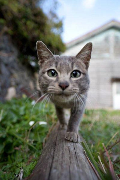 Cats Paradise - Начало   Facebook