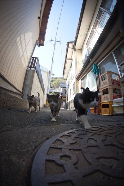 Cats' paradise in Japanese island of  Fukuoka (Credit Fubirai)