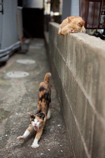 Cat Paradise - Wikipedia