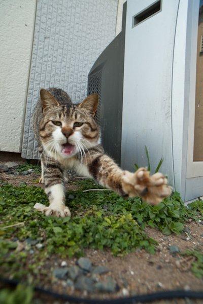 Cats' paradise in Japanese island of  Fukuoka (Credit Fubirai)