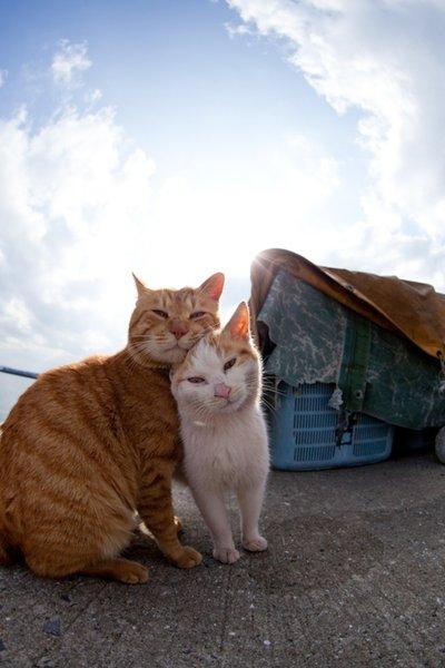 Pictures Cats Paradise (Pictures.cats-paradise.net) full ...
