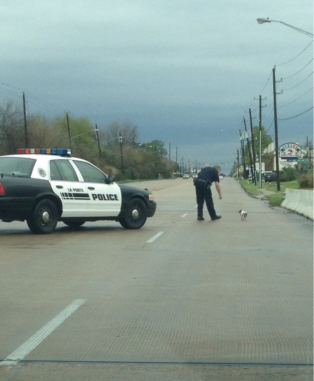 Touching Moments-police man help lame dog cross