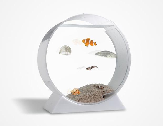 aquarium-insolite-16