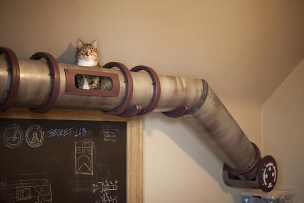 Tube Cat: Solution For Movement Of Cat Without Disturbing you