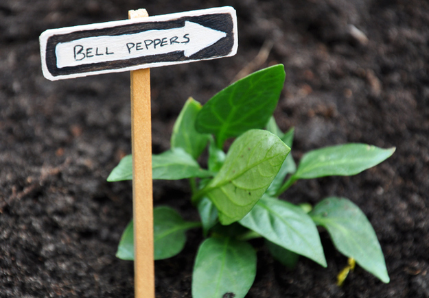 Make plant markers for your garden