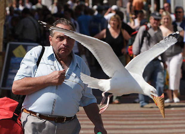 Bird taking away ice-cream  from  a man