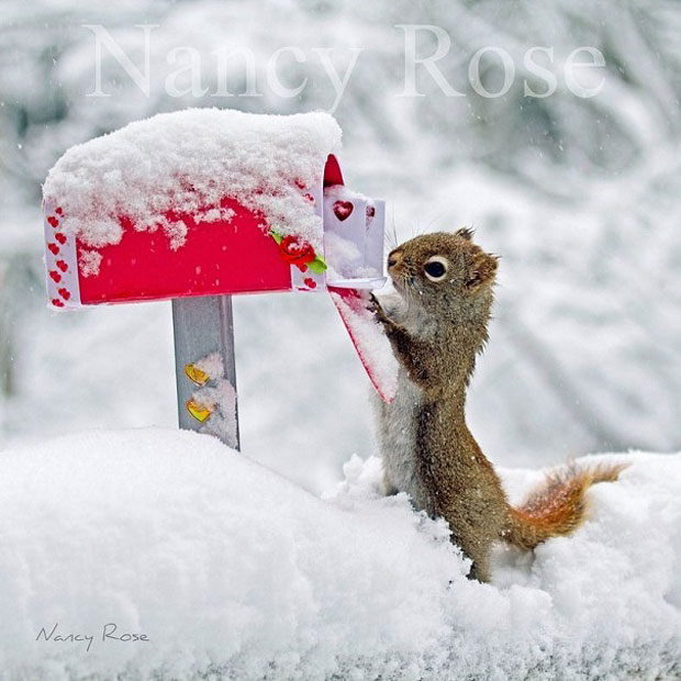 Super Cute Squirrel checking mail