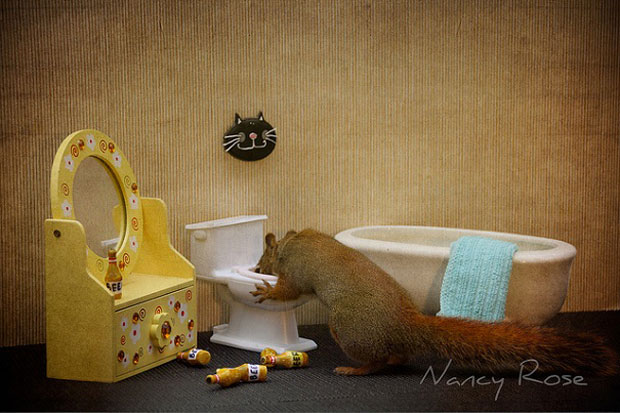 Super Cute Squirrel Cleaning Toilette