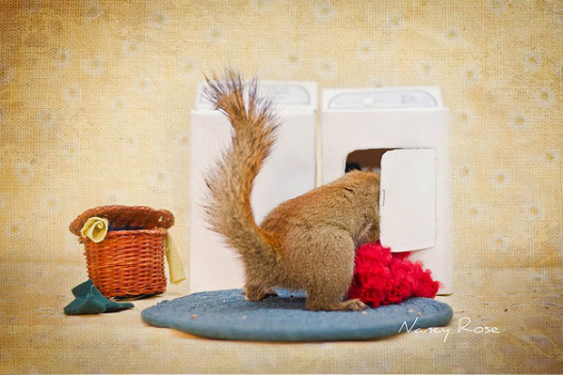 Super Cute Squirrel with washing machine