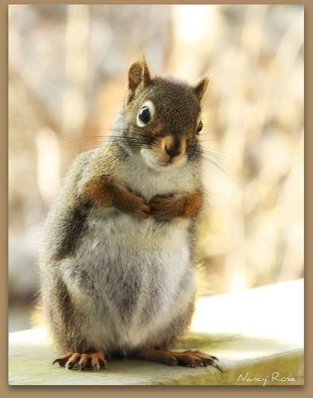 Super Cute Squirrel