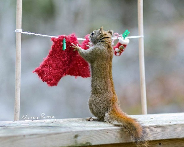 Super Cute Squirrel Drying clothes