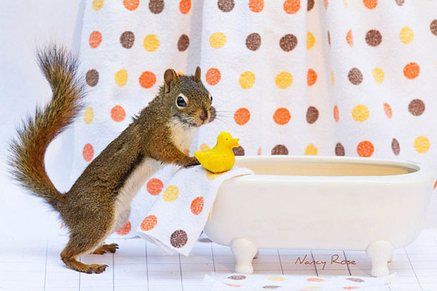 Super Cute Squirrel Near Tub
