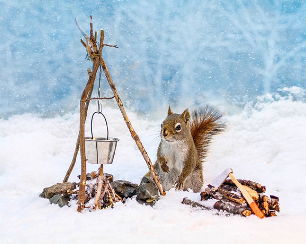 Super Cute Squirrel Cooking