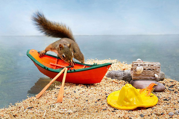 Super Cute Squirrel Boating