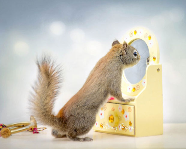 Super Cute Squirrel Mirror