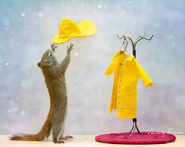 Super Cute Squirrel Wearing Clothes
