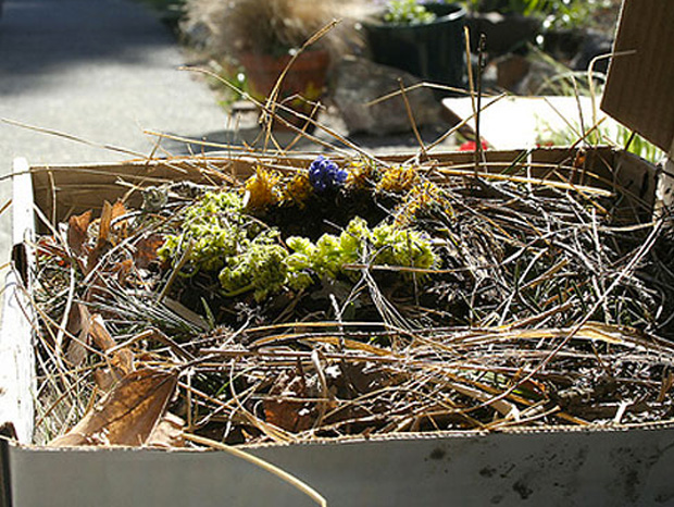 Cool ideas to reuse Pizza box: A Bird's Nest