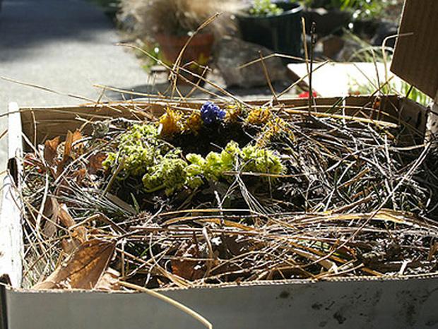 Cool ideas to reuse Pizza box: A Bird's Nest
