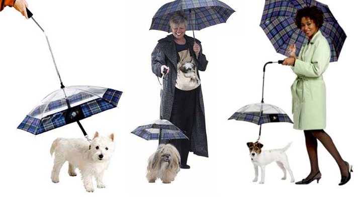 The umbrella nice little doggies who do not deserve to rain
