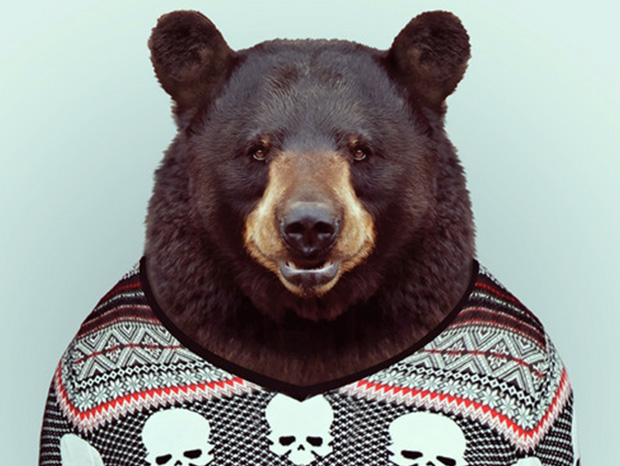 Bear More Smartly Dressed Than Human Beings