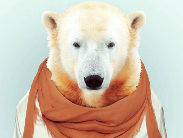 Polar Bear More Smartly Dressed Than Human Beings