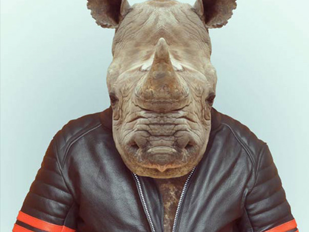 Rhinoceros More Smartly Dressed Than Human Beings