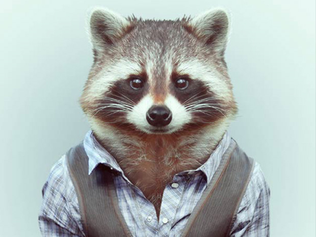 Animals More Smartly Dressed Than Human Beings