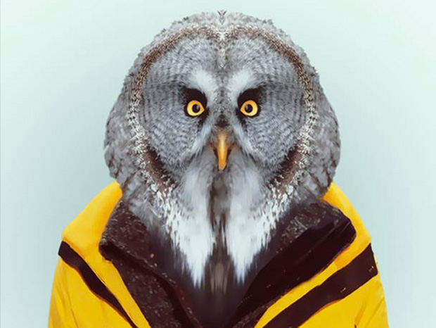 Owl More Smartly Dressed Than Human Beings