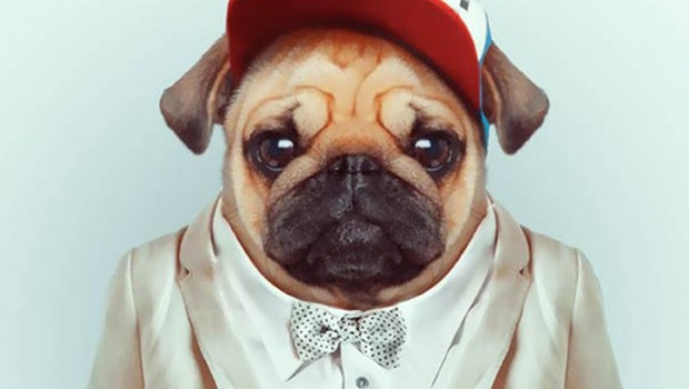 Animals More Smartly Dressed Than Human Beings 36