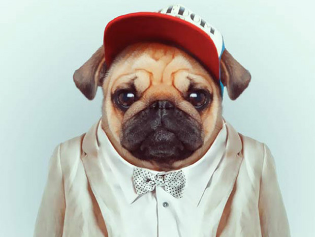 Dog More Smartly Dressed Than Human Beings