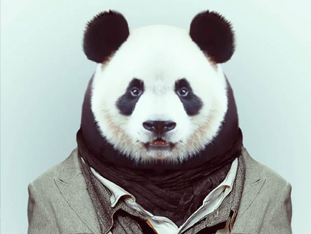 PandA More Smartly Dressed Than Human Beings